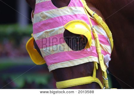 Race Horse Wearing Stripped Blinders
