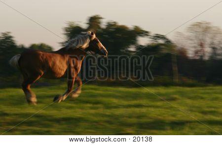 Horse Running Fast