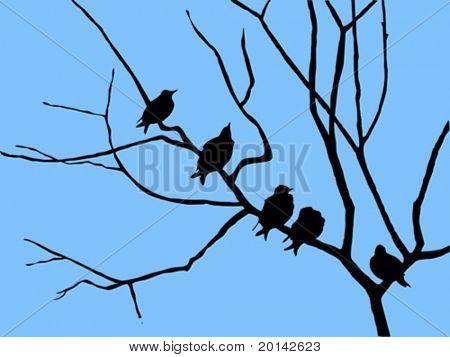 Estorninho de silhueta vector na árvore do ramo