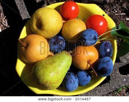 Harvest Of Healthy Fruit