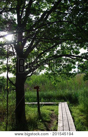 Wooden footbridge in a lush greenery at the swedish island Oland