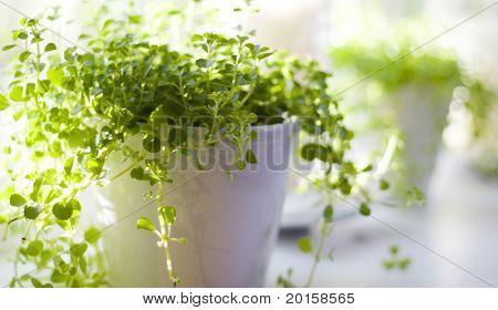 hermosa planta verde