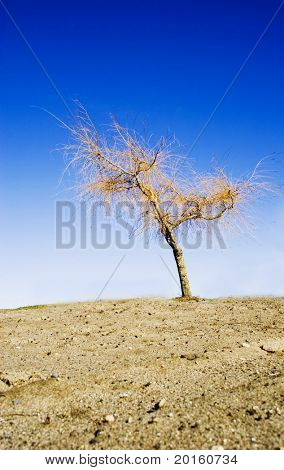 barren tree on barren land