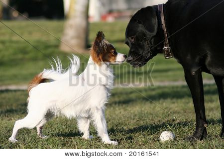 big and small dogs touching noses
