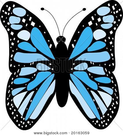 butterfly blue vector