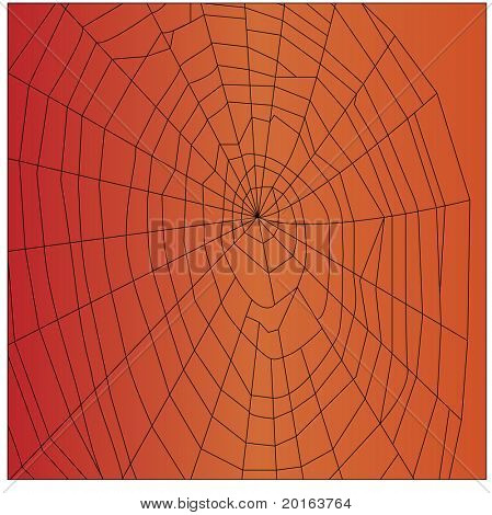 spiderweb on orange