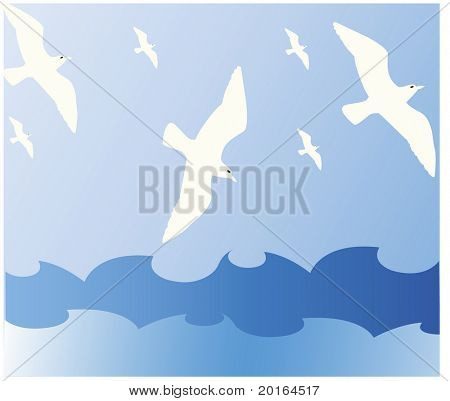 seagulls diving for fish