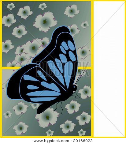 butterfly with flowers and border with whitespace for your additions or use alone