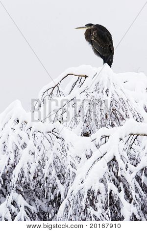 winter tree with snow and large heron crane on top