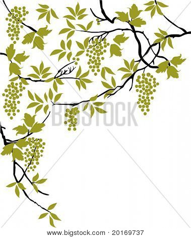 leaves berries and branches  vector