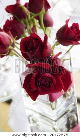 beautiful red roses in vase
