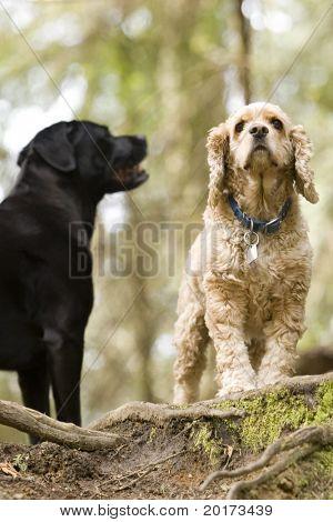 perro amigos un paseo