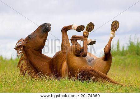 caballos jugando