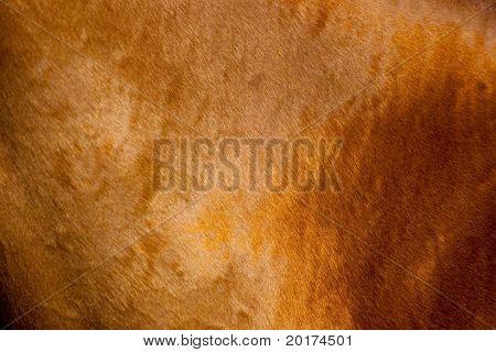 Coat of chesnut horse