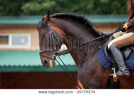Formación: niña montando a caballo oscuro Bahía en lluvia en platz