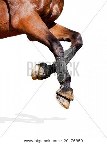 Horse legs isolated on white background.
