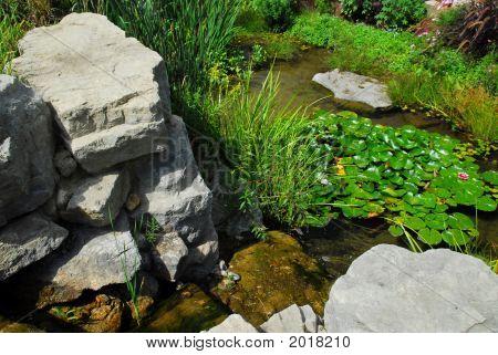 Pond Landscaping