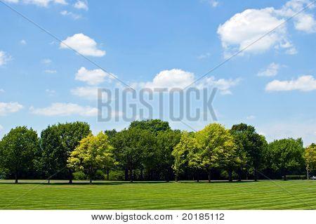 Tree Line with Sky