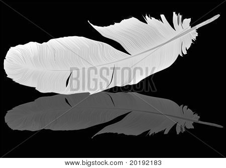 illustration with gray feather on black background