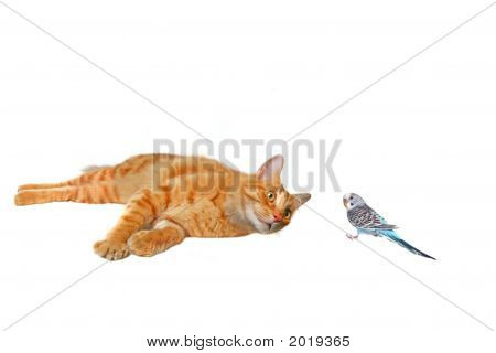Cat And Bird: Friends Or Foes