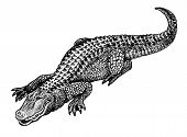 pic of stippling  - Stippled black and white drawing of a fat happy alligator - JPG