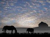 image of workhorses  - two horses on pasture at sunset - JPG