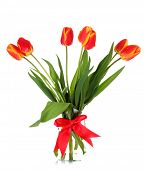 foto of flower-arrangement  - Red tulips on white background - JPG