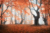 Amazing Scene With Autumn Trees In Fog poster