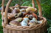 Close-up Shot Of Wicker Basket With Mushrooms poster