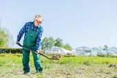 Senior gardener digging with a shovel in the garden. Sunny summer day. Gardening and agriculture. poster