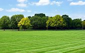 picture of manicured lawn  - Lawn with Tree line - JPG