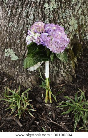 Wedding Bouquet Against A Tree