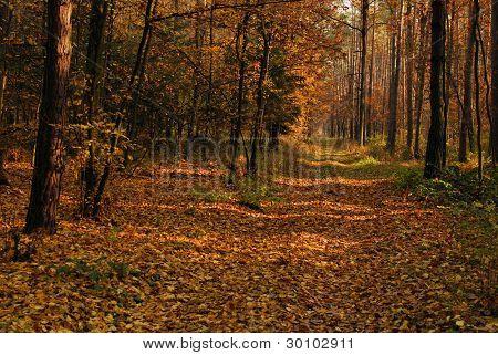 Straße durch einen bewaldeten Wald mit grünem Gras, Bäumen und Sträuchern.
