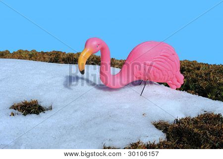 chilled flamingo