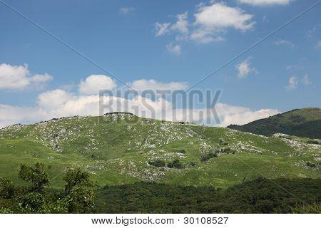 Grassland area
