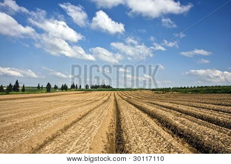Landscape With Agricultural Field