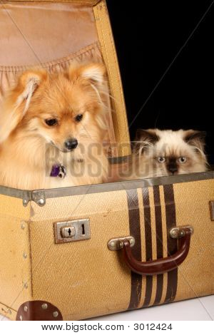 Puppy And Kitten In Suitcase