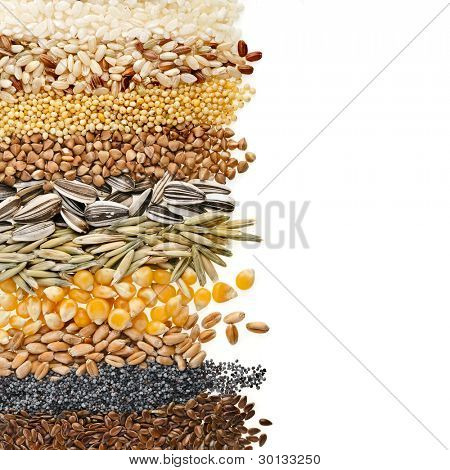 Cereal Grains and Seeds : Rye, Wheat, Barley, Oat, Sunflower, Corn, Flax, Poppy, border closeup on white background