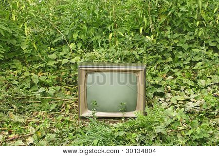 Old Tv Set Among Green Plants