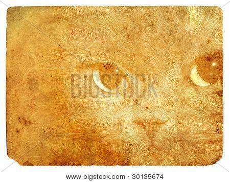 Expressive Cat Eyes. Old Postcard.