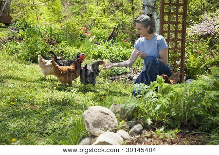 Raising Free-range Chickens