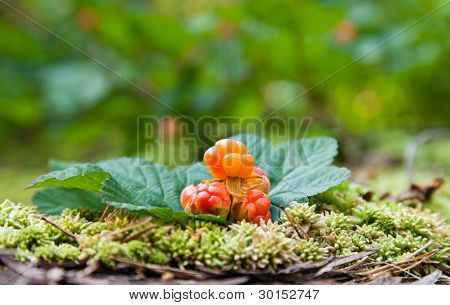 Rubus chamaemorus sobre un fondo desenfocado verde. Frutas silvestres