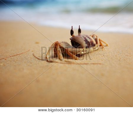 Crab on a yellow sand