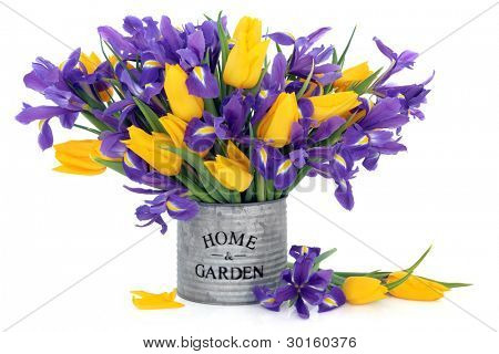 Blue flag iris and yellow tulip flowers scattered and in an old tin can with home and garden title over white background.