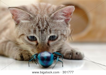 Cat Playing With Bug