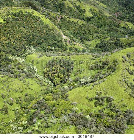 Tropical Hills.