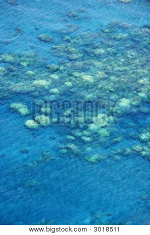 Hawaiian Korallenriff.