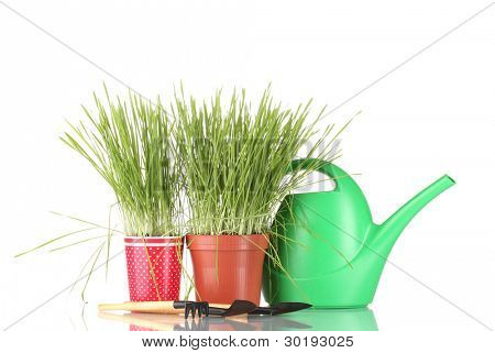 Green grass in two flowerpot on blue background
