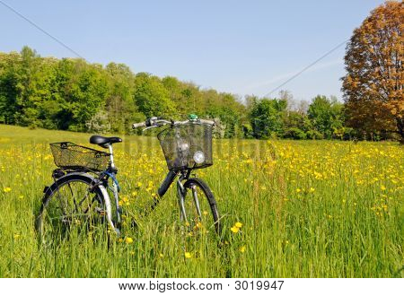 Bicycle In The Grass