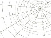 pic of spider web  - Spider Web on a white background vector - JPG